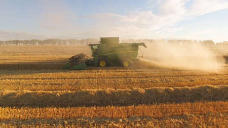 Moving combine harvester and dust. Wheat field.