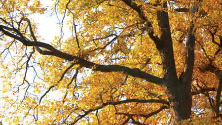 Colored trees in woodland. Yellow leaves shining in sun. Beautiful nature of fall. 免版税图像