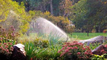 Blooming flowers in summer park. Water sprinkler in a garden pouring flowers. Spring landscape.