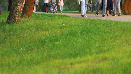 Urban park lawn close up. People walking in summer park, cropped image. 写真素材