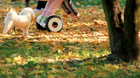 People with gyroscooter and white dog in the park. Autumn park covered with yellow oak leaves. People and leisure concept. Stock Photo