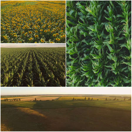 Agriculture fields collage. Collage of agriculture summer fields and landscapes. Archivio Fotografico