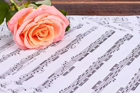 Pink rose and musical notes close up. Musical score pages and rose with water drops. Abstract musical background.