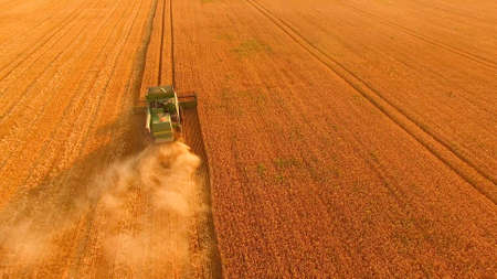 Wheat field and combine. Machine gathering crops, aerial view. Stok Fotoğraf