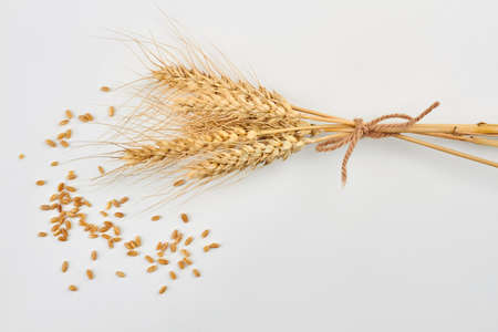 Ears and grains of ripe wheat. Fresh wheat seeds and ears on white background. Harvest concept. Stock fotó