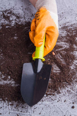 Close-up gardeners hand with glove holding a trowel. Black short shovel for gardening.