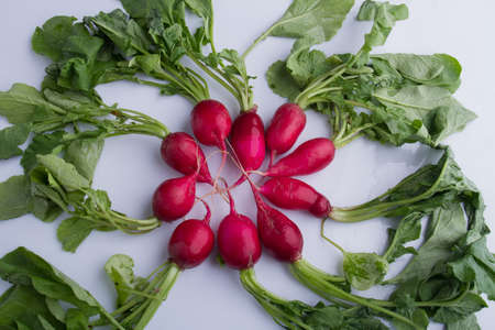 Ripe radishes arranged in a circle. White isolated background.