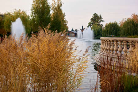 Dried autumnal reeds. Manor with fountains in a private property.