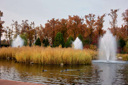 Park pond with ducks in autumn. Fountains, reeds and trees.
