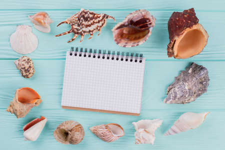 Top view of set of different sea shells and notepad in the centre of composition on turquoise background. Blank note pad.