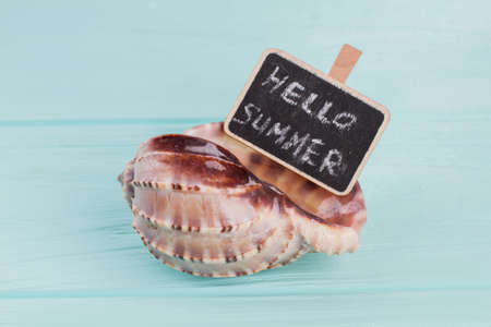 Little sea shell with sign on blue background. Hello summer on sign.