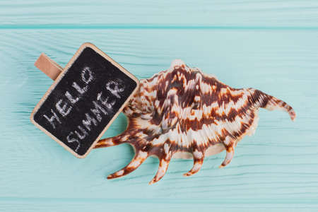 Close-up little seashell with sign Hello sea on blue background. Striped sea shell close up. Standard-Bild