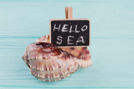 Seashell with chalkboard with hello sea text. Blue wooden background.