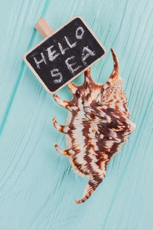 Little seashell with chalkboard with hello sea text. Light blue background. Flat lay photo. Standard-Bild