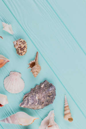 Colorful sea shells on blue background with copy space. Flat lay from top view.