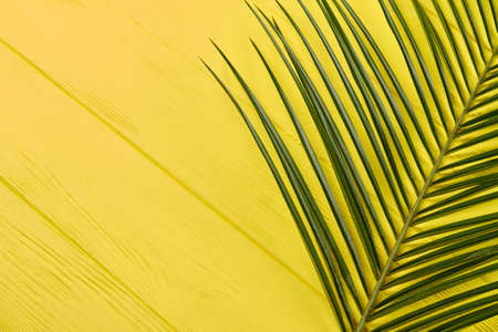 Long thin straight leaves. Colored yellow desk background.