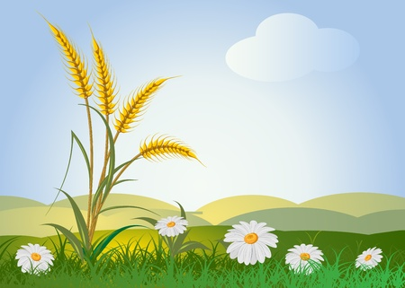 horizon over land: ears of wheat with landscape, sky and flowers  Illustration
