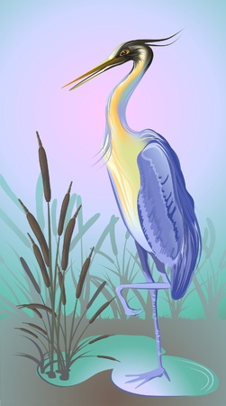 blue heron: heron with reed and water  Illustration