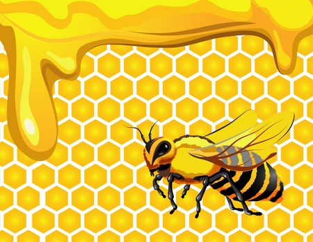 Bee with drops of honey and honeycomb hexagon shapes  Vector