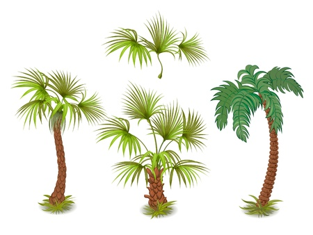 palm tree isolated: collection of tropical palm trees Illustration