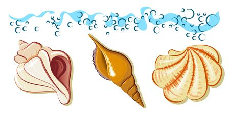 conch: collection of sea shell on the beach with wave