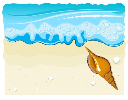 sea shell on the beach with wave and sand Vector