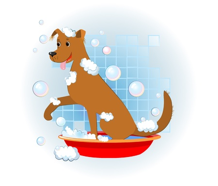 piebald: funny dog wash in bathroom