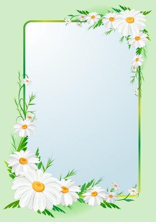 kamille: floral border background