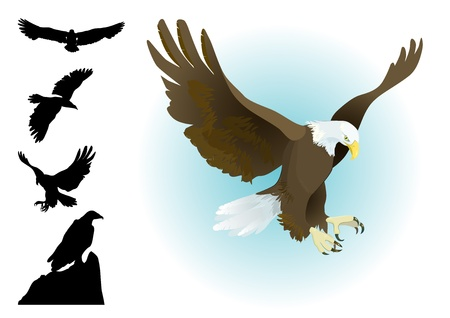 flying eagle: eagle