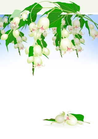 exotic tree white flowers and leaves with place for text Stock Vector - 13404764