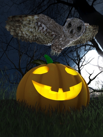 Halloween pumpkin and owl in night forest holiday background photo