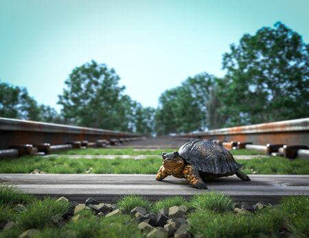 crossing: Railway track crossing rural landscape and turtle. Travel concept