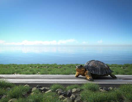 schildkröte: Kleine grüne Schildkröte am Strand. Tourismus-Konzept-Hintergrund