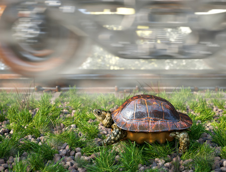 faster: Whos faster. Railway track and train with running turtle. Travel technology concept