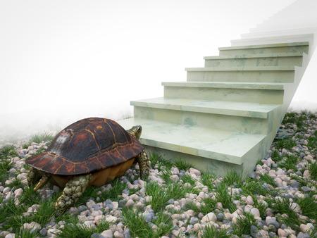 trepadoras: tortuga en movimiento quiere subir en el fondo del concepto de escaleras