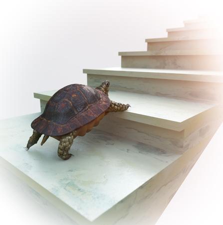 escalando: tortuga en movimiento quiere subir en el fondo del concepto de escaleras