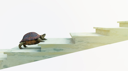 moving turtle wants to climb on the stairs concept background