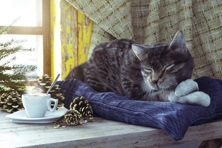 Gatto di sonno sulla finestra invernale sfondo composizione concetto