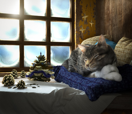cat sleeping: Sleeping cat on winter window background concept composition 3d render