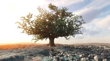 ecological damage: A single tree left in a desert rock landscape conceptual background