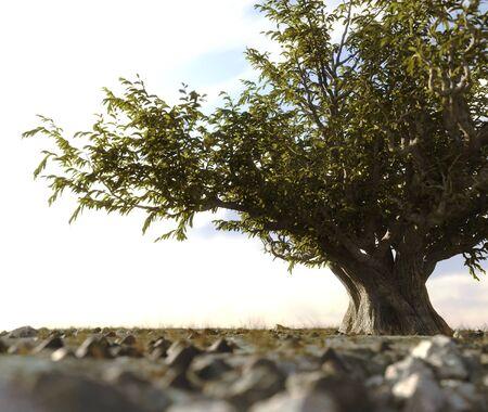 ecological damage: single tree left in a desert rock landscape conceptual background 3D illustration Stock Photo