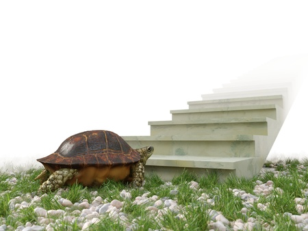 upward struggle: moving turtle wants to climb on the stairs concept background