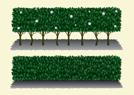 Long hibiscus bush as a green hedge or fence. Illustration