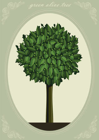 olive green: Green olive tree with fruit  in vector graphics.