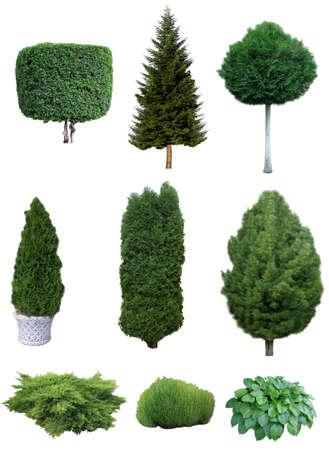 Set of various evergreen trees and shrubs for the garden design.