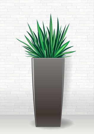 evergreen: Decorative evergreen plant in a garden pot in graphics on a light background