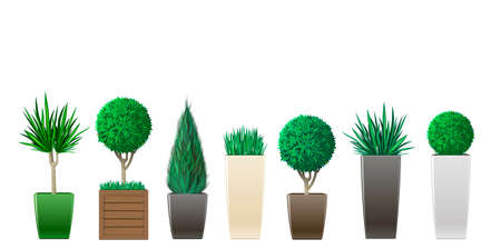 cypress: Set of decorative plants in pots of different sizes and colors graphics Illustration