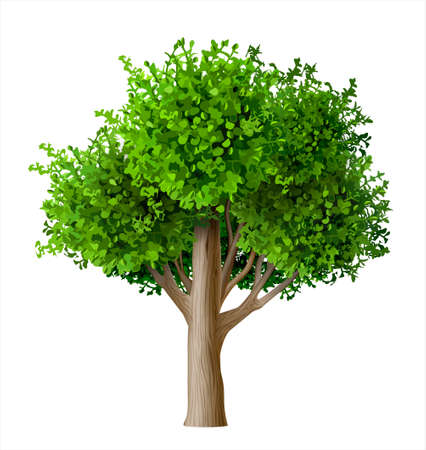 Realistic vector tree with leaves. Plant with green foliage. Forest nature and ecology.