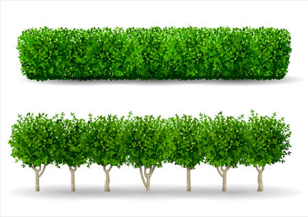 Bush in Form einer grünen Hecke. Zierpflanze. Der Garten oder der Park. Satz Zäune. Vektorgrafik
