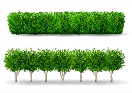 Krzew w postaci zielonego żywopłotu. Roślina ozdobna. Ogród lub park. Zestaw ogrodzeń. Ilustracje wektorowe